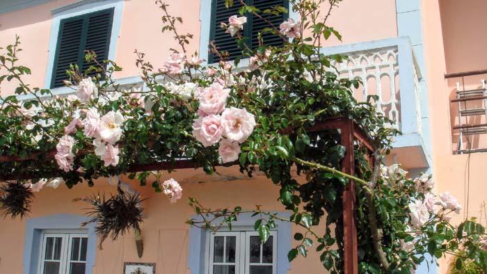 Vakantiehuis Madeira? Het onze staat midden in de natuur en de rozen bloeien in de tuin.